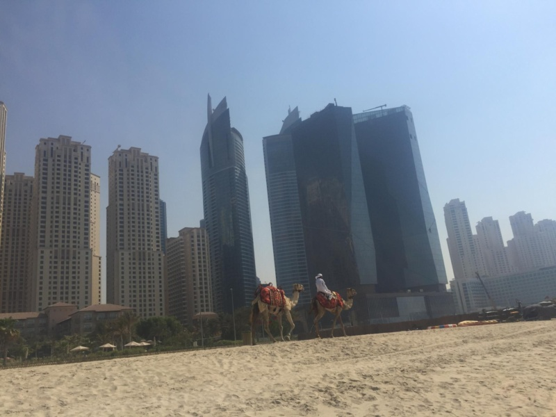 wanderlust bee six days in Dubai
