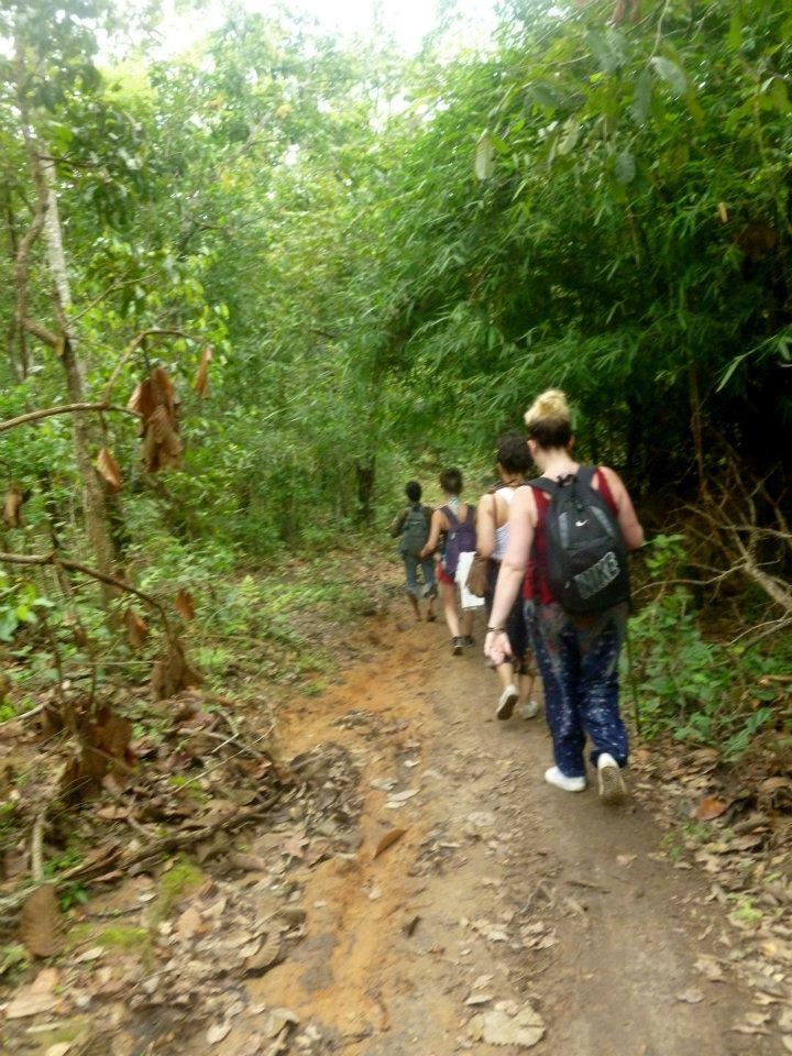 wanderlust bee jungle trekking in chiang mai